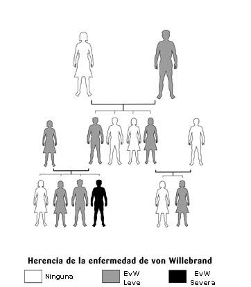 Herencia de la enfermedad de Von Willebrand: dibujos que simbolizan parejas y su descendencia