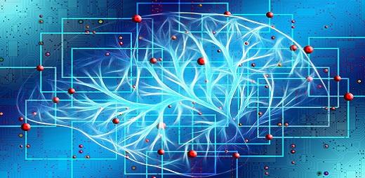 Ramificaciones del cerebro. Accidentes cerebrovasculares (fuente pixabay)